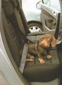 Attraktiva Bilsele för hund KO-15