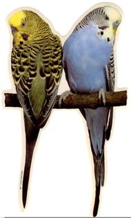 Klistermärken fönster fåglar